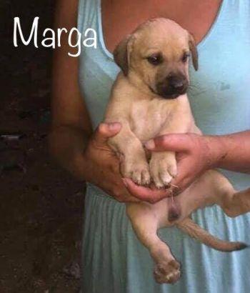 Marga1