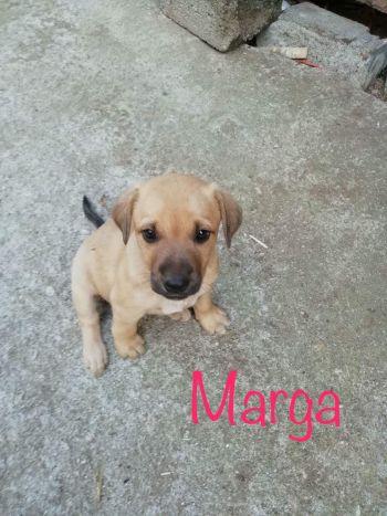Marga3