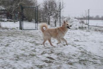 Olaf16