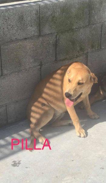 Pilla7