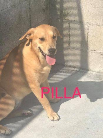 Pilla9